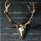 twelve point deer antler
